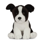 Living_Nature_Border_Collie_Puppy