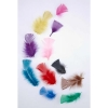 Educational Colours Tropical Feather Packet of 20